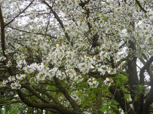 Je tu jar, všetko je rozkitnuté
